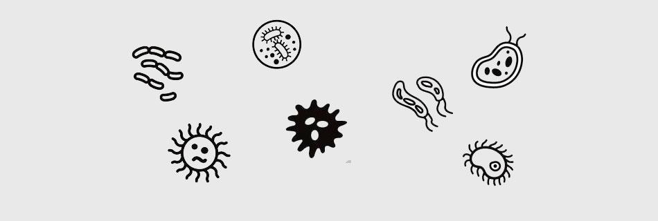 Фото: чем опасна инфекция?