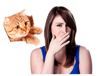 Фото: пот пахнет кошачьей мочой - раскрываем причины недуга у женщин и мужчин